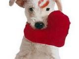 Подарки на День святого Валентина в традициях разных народов